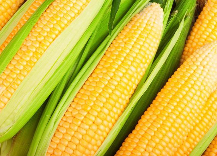 Александр Усанин. ГМО-технологии: предоставление доступа к пище
