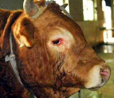 У животных тоже есть душа, они живые. Люди давайте спасем мир!